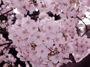 Flower1-012